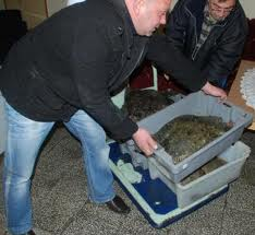 От 1 април влиза в сила забраната за улов на калкан