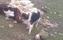 Сигнал: Трупове на животни се търкалят в с. Звездец