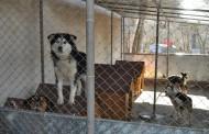 70 000 лева за бездомните животни в община Поморие