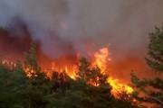 Локализиран е пожарът на територията на община Ардино