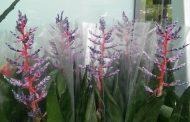 Листопадни лиани, ехинацея, цветето феникс и летен люляк - част от растенията във