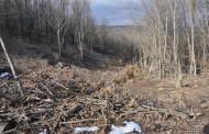 Незаконна сеч в земеделски територии, текат проверки