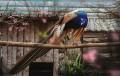 Данъчни под прикритиезапечатаха зоокомплекс край Бургас