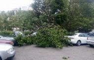 Паднало дърво изпочупи коли в Бургас