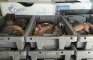 Предадоха над тон конфискувана риба на Социалния патронаж