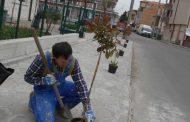 Добрата новина: Помориец засади седем дръвчета, закупени със собствени средства