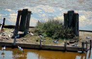 """Камера в Посетителски център """"Поморийско езеро"""" показва птиците на лагуната в реално време"""