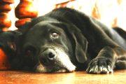 Куче използва собствена валута, за да си купи лакомства