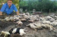 Животновъд от Кости за чумата в селото: Този път Странджа ще загине!