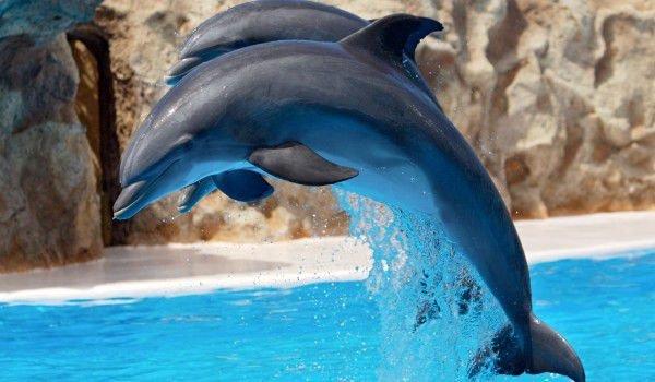 Бургас може да има център за лечение на делфини