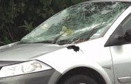 Дърво затисна автомобил със семейство край Крайморие