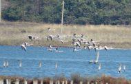 Наблюдавайте на живо птиците в Атанасовско езеро, вижте как