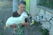 Край на драмата в Шарково. Умъртвиха животните на баба Дора