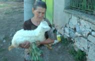 Отложиха евтаназията на животните на баба Дора. Тя: Съселяни ми казаха, че ако не ветеринарите, те ще ги заколят
