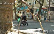 Клон падна върху майка с количка в Бургас /снимки/