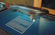 Най-интересните черноморски риби разкриват тайните си пред гостите на остров Св. Анастасия