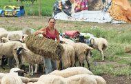 Извънредно! 8 мърти овце във фермата в Болярово, сигнализираха прокуратурата за противодействие срещу ветеринарните власти