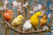 Изложба с над 250 елитни канарчета ще гостува в Бургас в началото на ноември