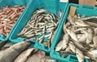 """В Несебър почитат рибарството с фестивала """"Есенни пасажи""""  /видео/"""