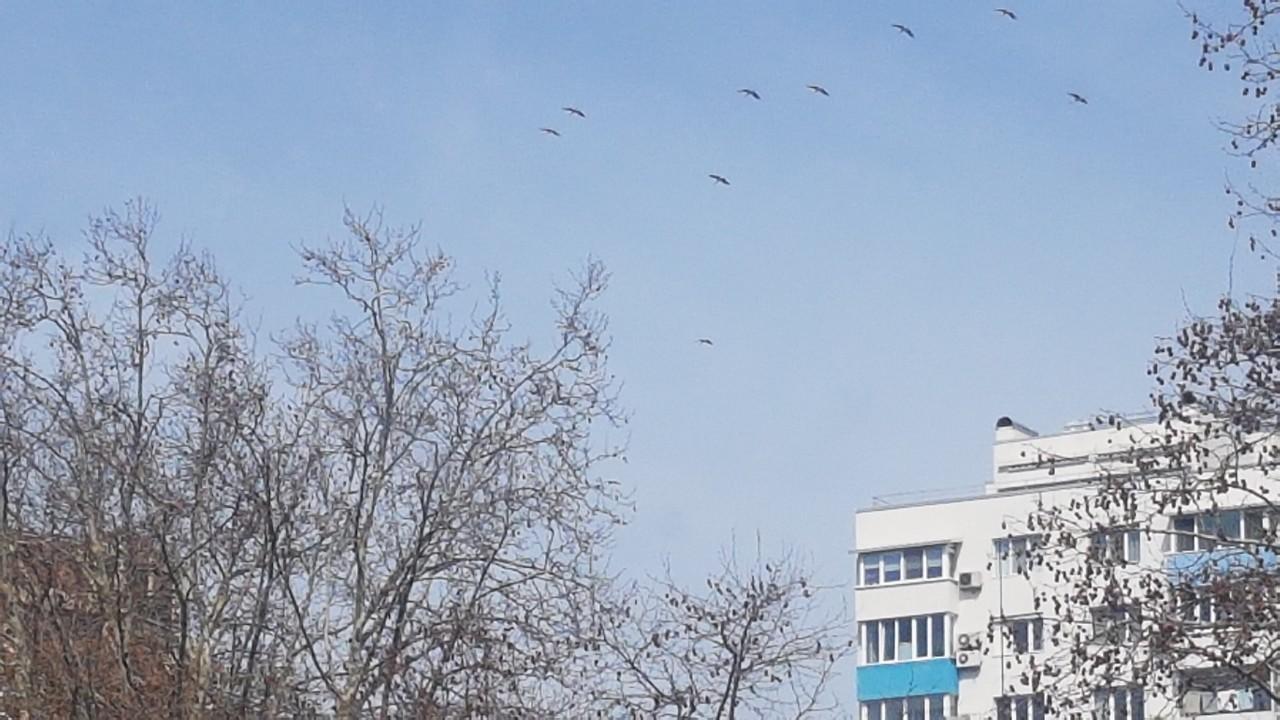 Първите щъркели прелетяха над Бургас