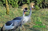 На 20 април откриват официално Зоопарк Бургас при вход свободен