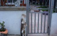 Зверство! Обесиха котка пред къща в Ахтопол (18+)