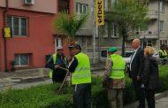 Поморие стана по-зелен с 50 нови палми