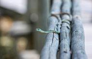 Змии плъзнаха в детска градина в Мадан