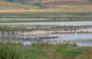 Гнездовият сезон на Атанасовско езеро силно закъснява (ВИДЕО)
