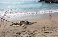 Мъртви крави откриха на плажа край Обзор
