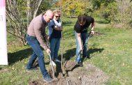 БСП засадиха 51 дръвчета с послание за по-чист Бургас /снимки/