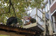 Свалиха 1-метрова игуана от липа в Стара Загора