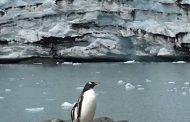Бургас: Проблемите на Антарктида в изложба и фил