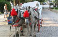 РЕТА: България да забрани впрягането на коне за атракция по морето