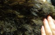 Бургазлийка излъга, че са и откраднали палто от норка заради застраховка