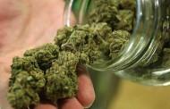 Гошо затварял буркани с марихуана