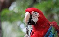 Показват 27 вида папагали във Флората