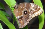 """Изложбата """"Живи тропически пеперуди"""
