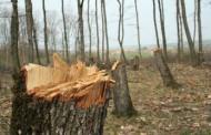 Полицай от Приморско заловен за незаконен добив на дърва