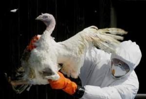 Предприеха превантивни мерки за предотвратяване на птичи грип в Бургаско