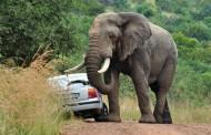 Слон уби фотограф в Шри Ланка