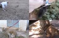 Ако ви е писнало да събирате на кученцата... /видео/