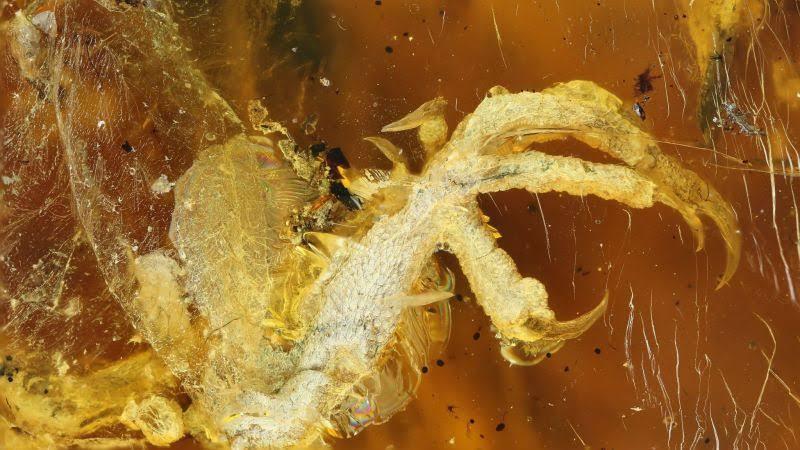 Откриха запазена птица на близо 100 млн. години в кехлибар