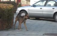 Кучета в сливенско село убиха стопанина си