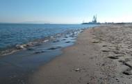 Мъртви медузи на бургаския плаж