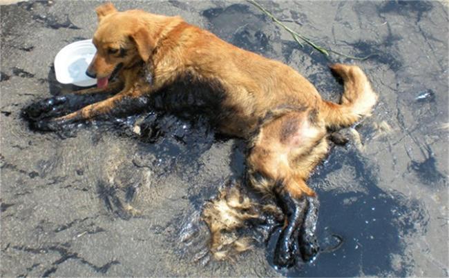 Садист заля куче с разтопен асфалт