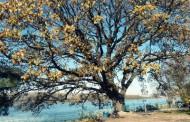 Ето го новото дърво на годината