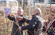 ГЕРБ се включиха в зарязването на лозите