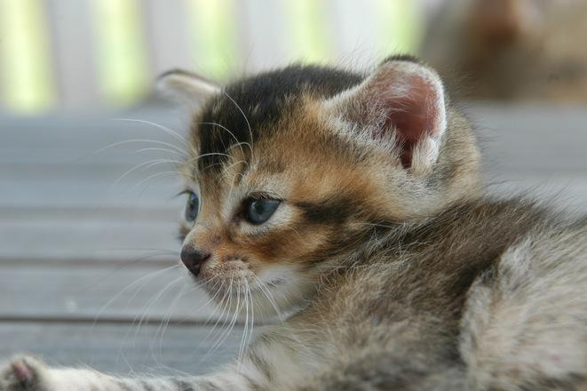 Седем трика за собствениците на котки /видео/