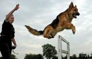 Обучават кучета-спасители в